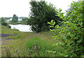 SJ9403 : Gravel Pit and Knotweed, near Hilton Park, Staffordshire by Roger  Kidd