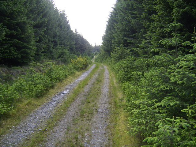 Track through Forest Clearing
