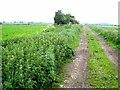 TL5484 : Bield Drove, Wood Fen by Oliver Dixon