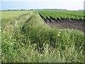 TL6491 : Potato crop, Feltwell Anchor by Oliver Dixon