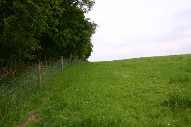Field and Woodland Border