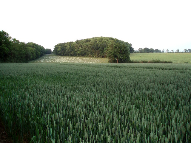 Evershaw Copse from the Westbury Circular Ride
