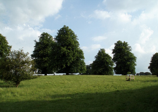 Trees in Biddlesden Park