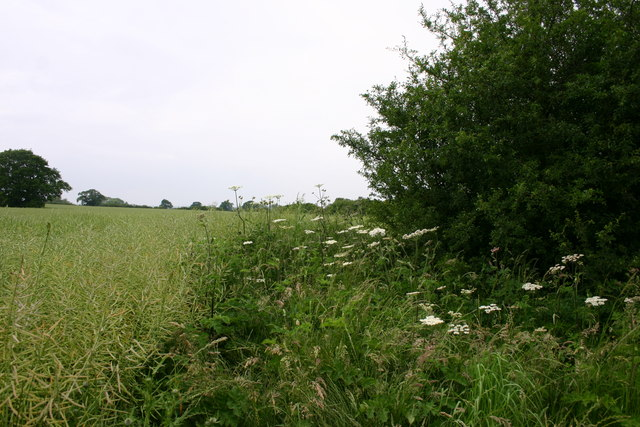 Field-Hedge Border
