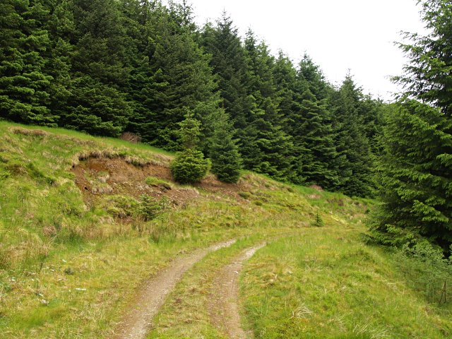 Forest track, Stock Hill