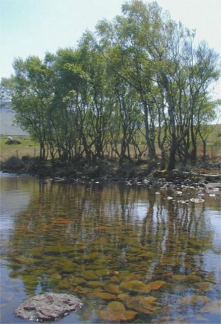 Cregennen Lake Treeline