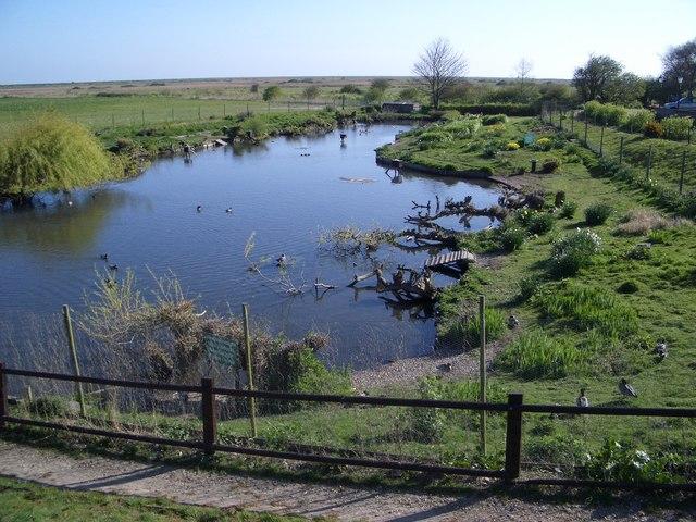 A Water Bird Paradise at Blakeney