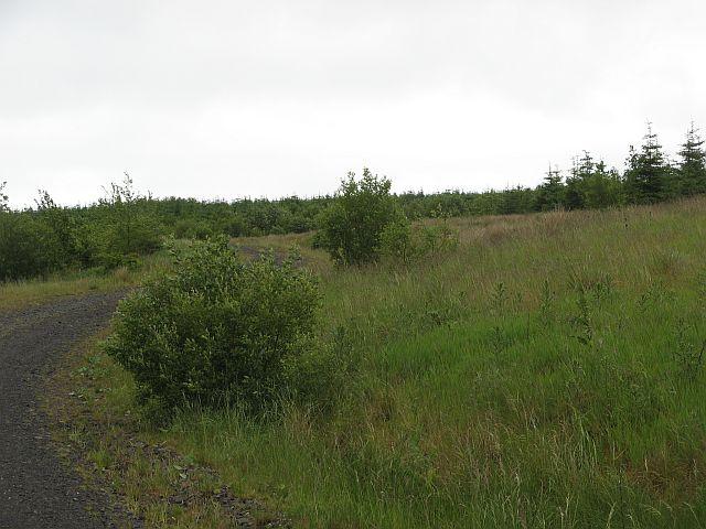 Auldnaw