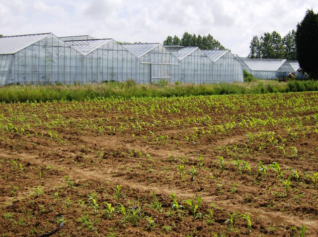 Greenhouses at Great Budbridge Manor