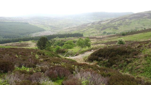 Nant yr Hillwyn valley