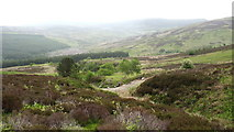 SJ0838 : Nant yr Hillwyn valley by Eric Jones
