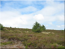 SJ0837 : Heather moor above the valley of Nant y Lladron by Eric Jones