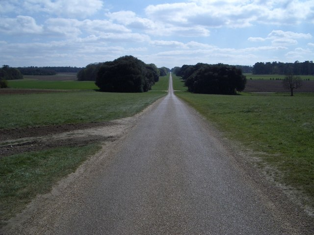The Avenue in Holkham Park