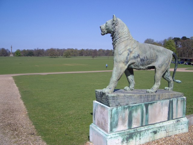 Big Cat Looking Towards the Monument in Holkham Park