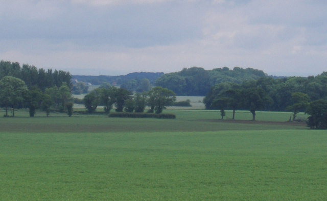 Scattered trees in farmland near Towton Spring