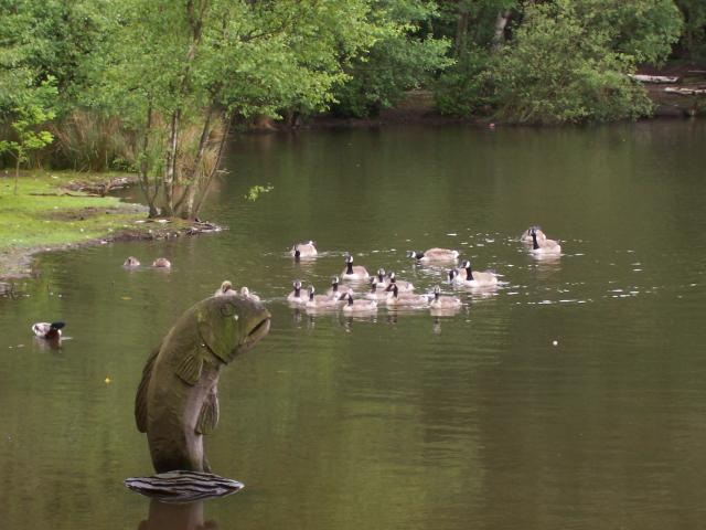 Geese and sculpture of a fish on coppice joe regan cc for Ponds to fish in near me
