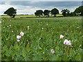 SU3241 : Farmland, Abbotts Ann by Andrew Smith