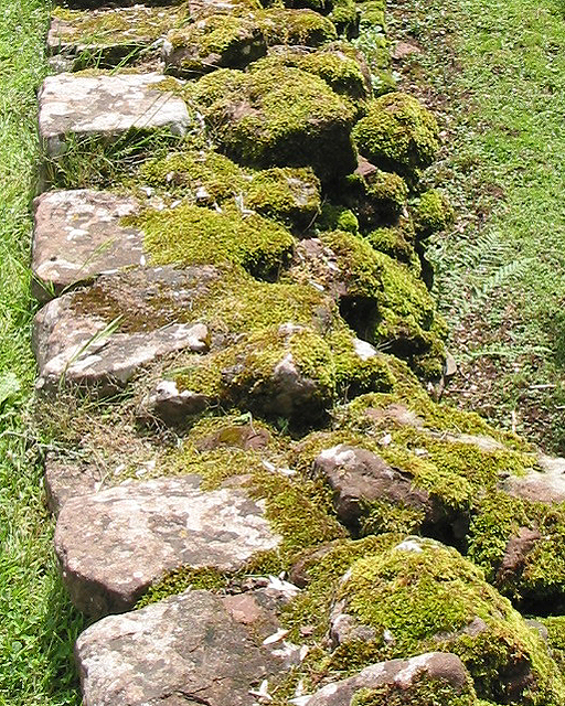 Mossy wall, Goodrich Castle stables area