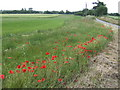 TG3904 : Poppies on the corner by Jonathan Billinger