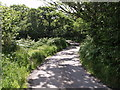 SX0060 : Lane near Tremodrett by Derek Harper