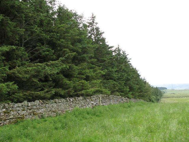 Colleylaw Plantation (west side)