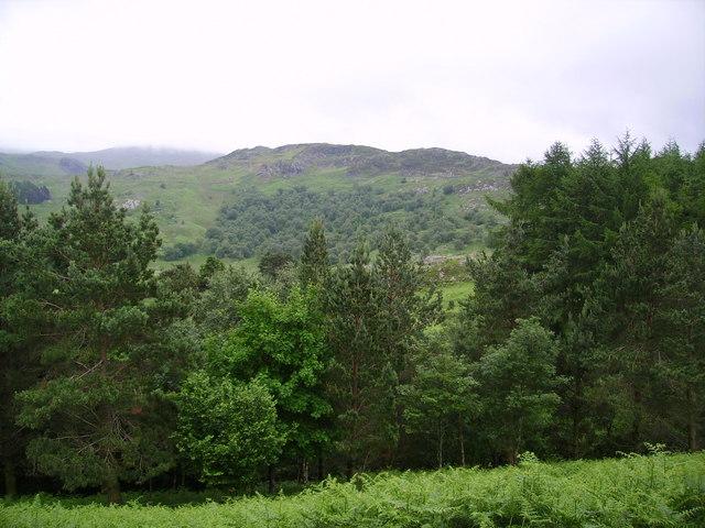 Plantation above Watendlath