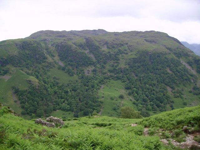 Broad Haystack