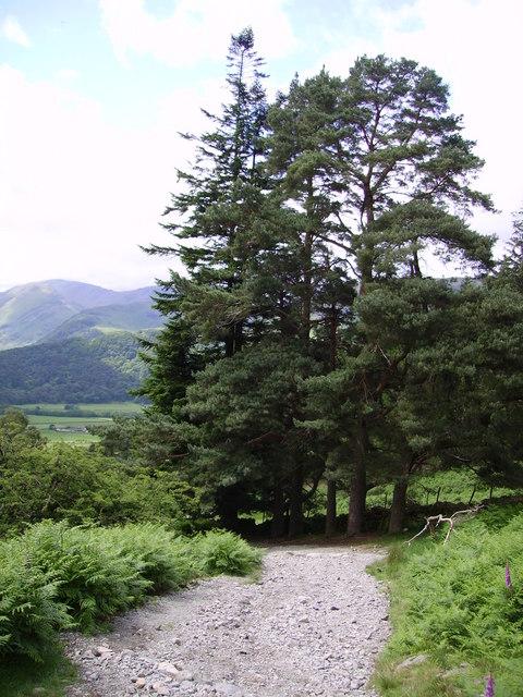 Six Pines