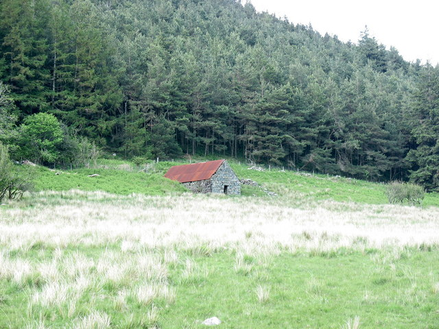 Tin-roofed barn at the edge of the forest