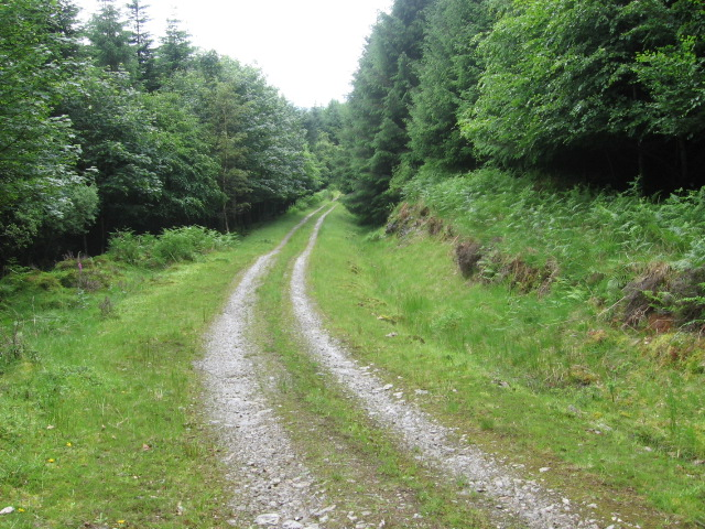 Track in Merk Park woodland