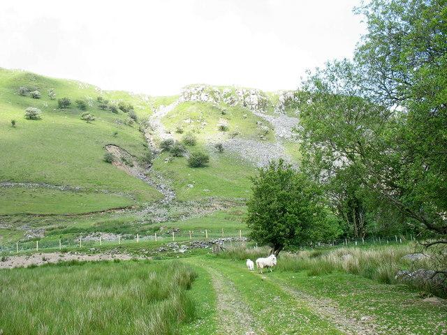 Sheep below Allt-lwyd