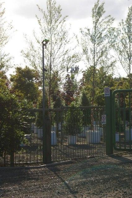 Communications mast, hidden in trees