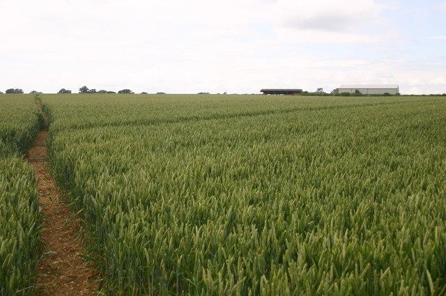 Path near to Walducks farm