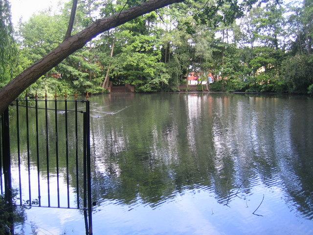 Ascot: Blackmoor Pond