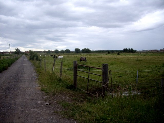 Horses grazing rough pasture near Meols, Wirral