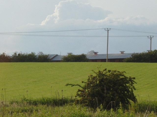 Field at Glaudhall Farm