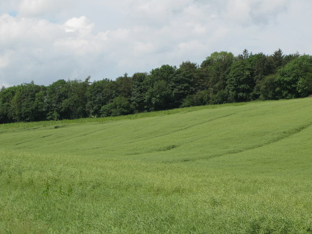 More arable land and another wood north of Fourstones