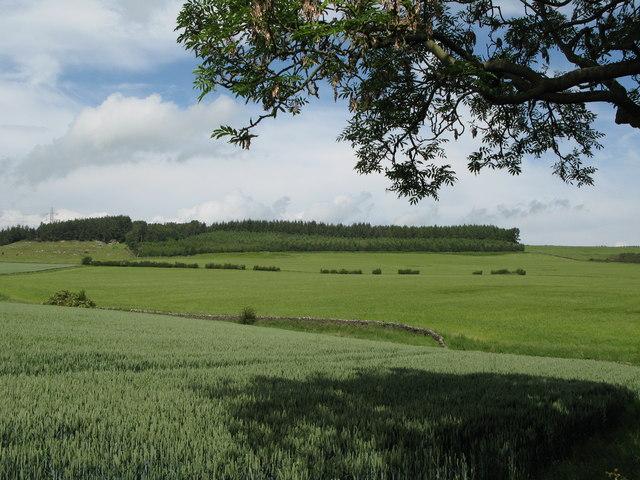 Arable land near Park Shield