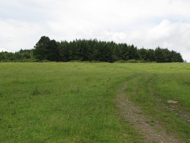 Track to Carr Edge Plantation