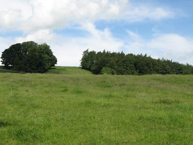 Spout Bog Wood