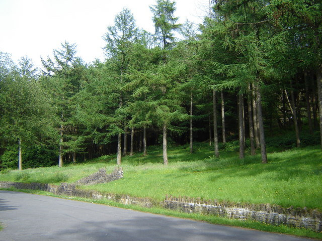 Forest from the car park