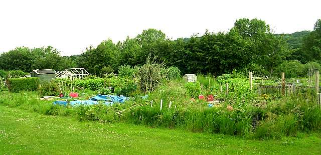 Castle Road Allotments