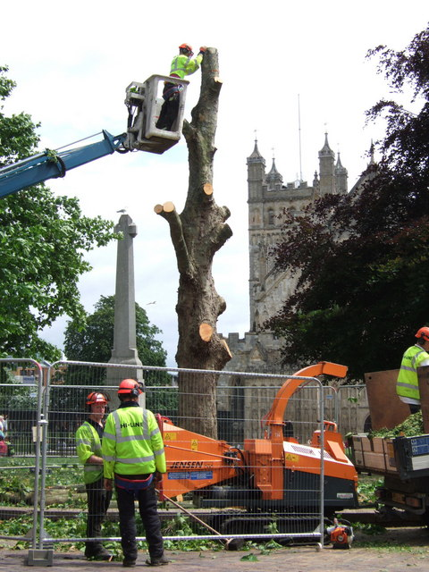 Removing the plane trees, Exeter