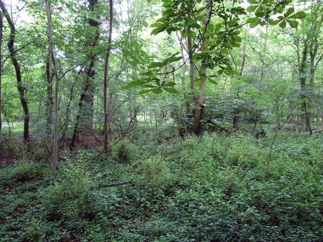 North Plantation near Croxton