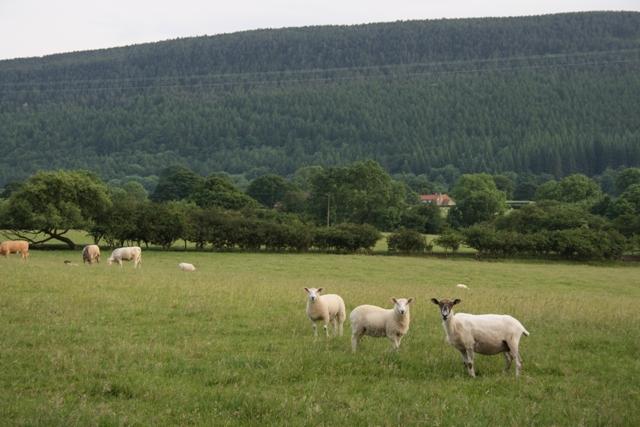 Pasture, Near Whorlton House