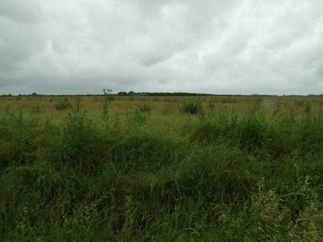 Open ground - Looking towards Pembroke Farm