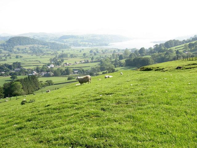 Improved pasture above Cil-gellan