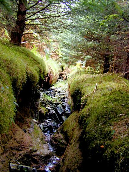 Mossy stream at Glen Gloy