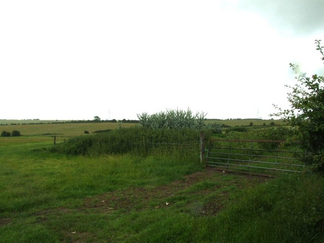 Field, enclosure, gate and huge thistles