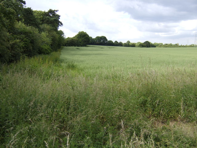 Oat field by Norwich Road, Swaffham